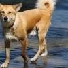 bodensee-hund106