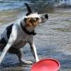 bodensee-hund118