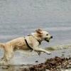 bodensee-hund227